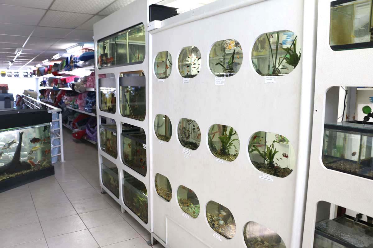 Guiffer Interior Aquarismo 2